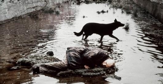 Stalker - Dog 2