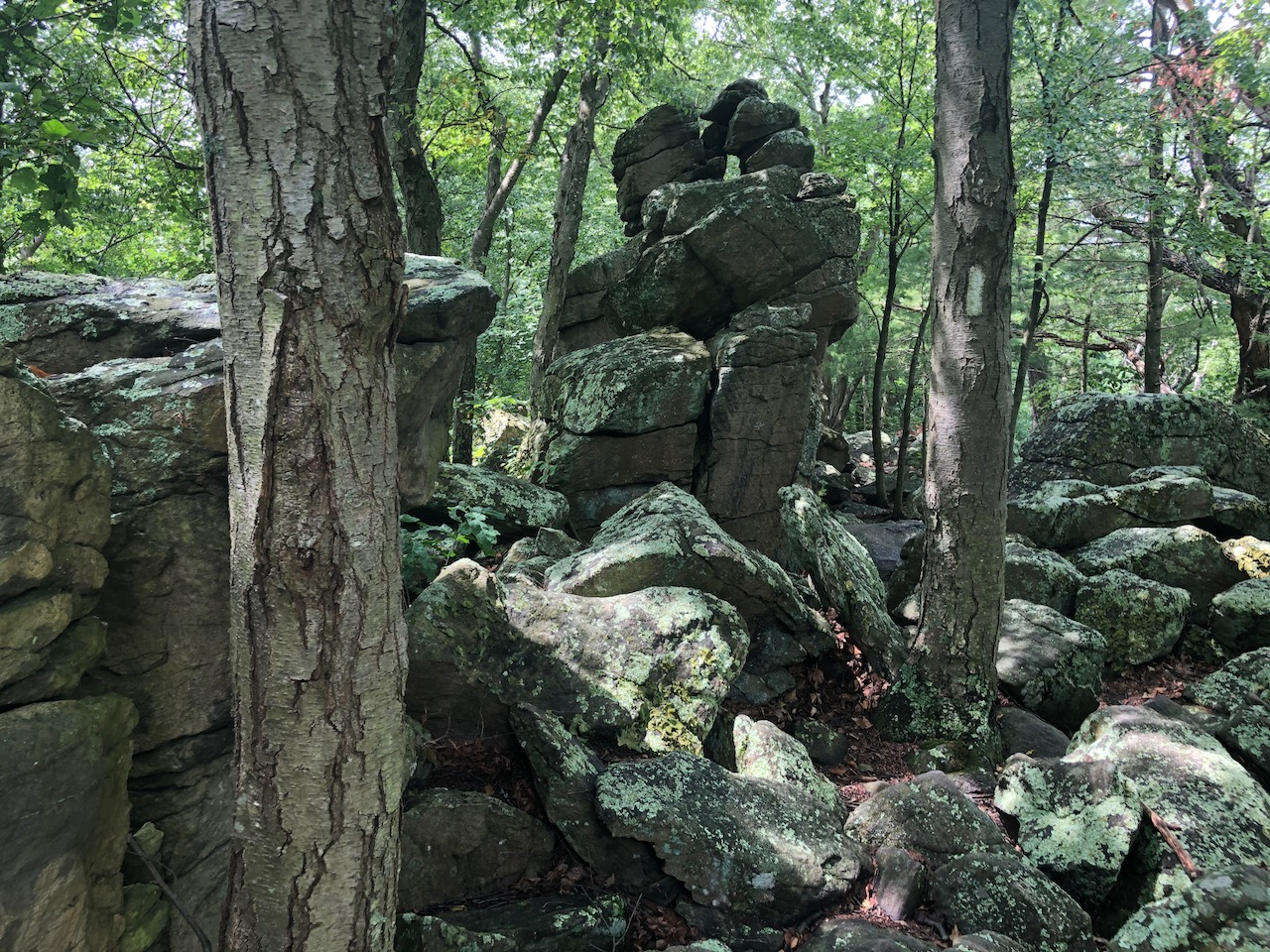Photo of mossy rocks